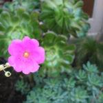 lajolla-landscape-flower