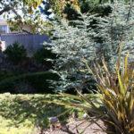 lajolla-landscape-front-yard