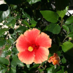 lajolla-landscape-san-diego-flower