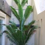 san-diego-landscape-palm