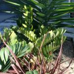 san-diego-landscape-plants