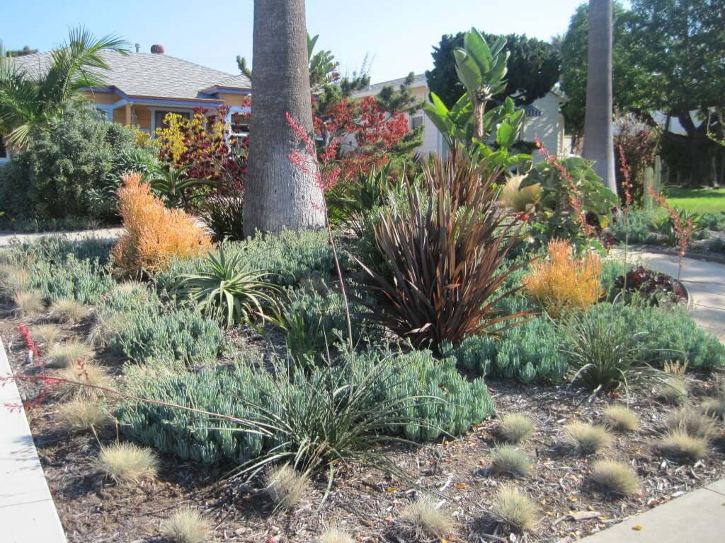 san-diego-Maintenance-landscaping